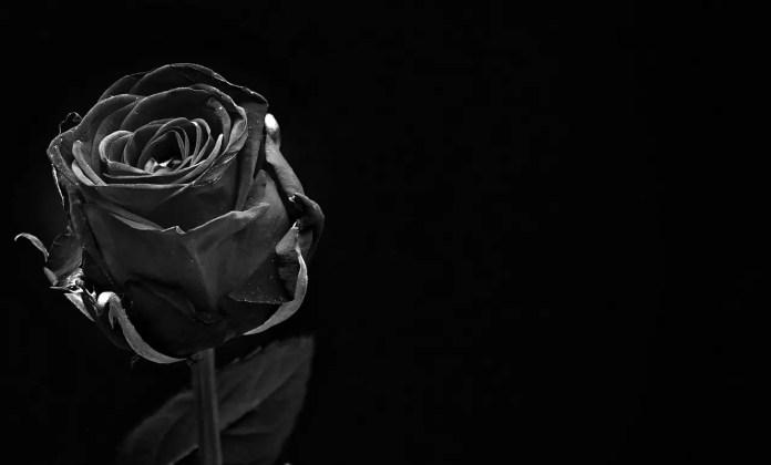 Цветът на розите носи тайнствени послания - Черна