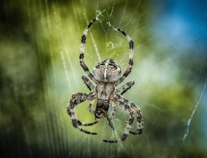Паяците са древни - снасяне на яйцата