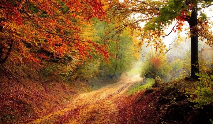 Повишаване на имунитета през есента