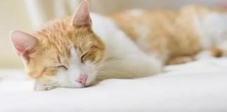 Съвети за добър сън