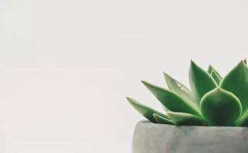 Най-полезните стайни растения