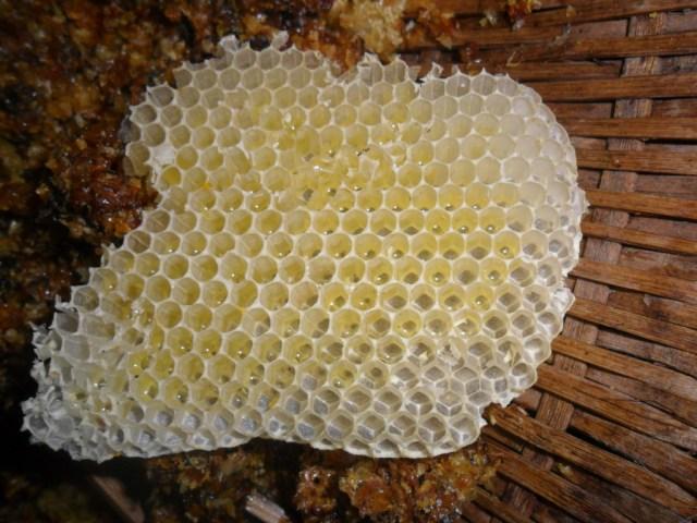 Tác dụng của keo ong - sáp ong với làn da và sức khỏe 2
