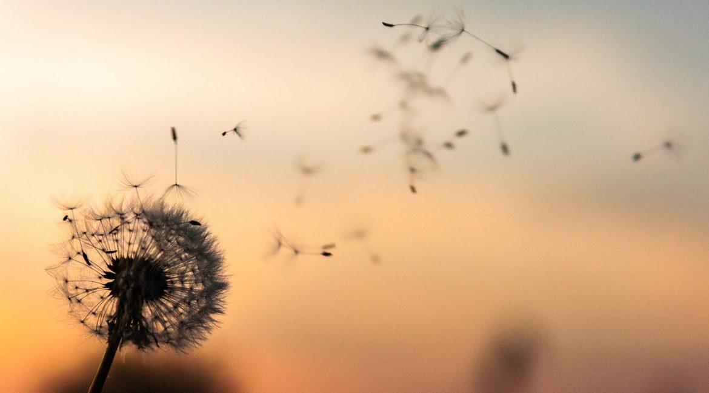 Secrets d'auteur. Questions pour une autrice : soulever un bord du voile. L'écrivaine et poète Maïm Garnier à découvrir sur Sansible. #autrice #auteur #ecriture #narration #secretsdauteur #MaimGarnier #sansible