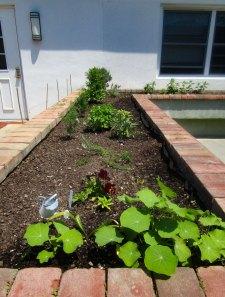 herb & vegetable garden - 3