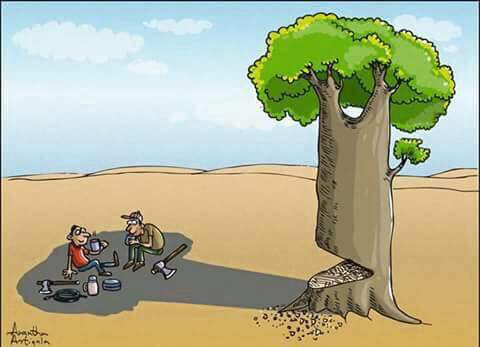 importance of tree