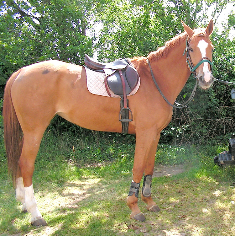 cheval_selle