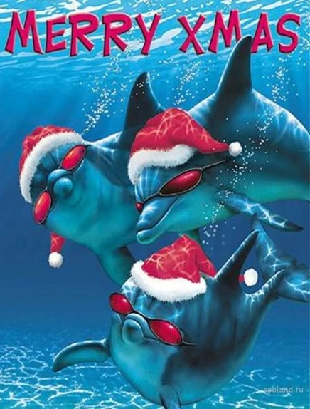 Dolphins Christmas Party