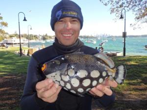 Clown Triggerfish - Derrick Cruz