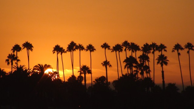 Palm Trees with Sunset from Beach. Copyright 2012 Jued Martinez, Santa Barbara Local Publishing Company. All Rights Reserved.
