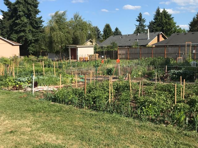 Garden plots look lush now and will generate a lot of food over the next few months.