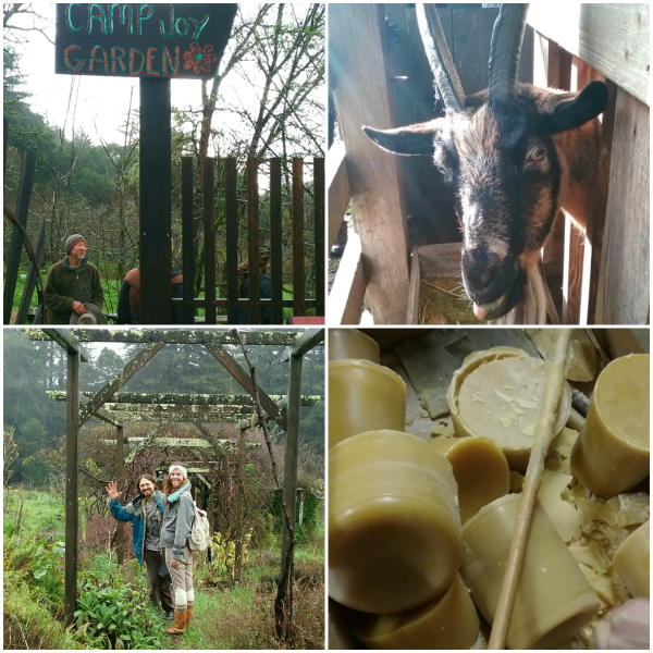 Four images in a square: Jim Nelson standing at the gate to Camp Joy Garden; a goat in its pen; David Shaw and participant Colby waving from Camp Joy Gardens; beeswax from Camp Joy Garden bees