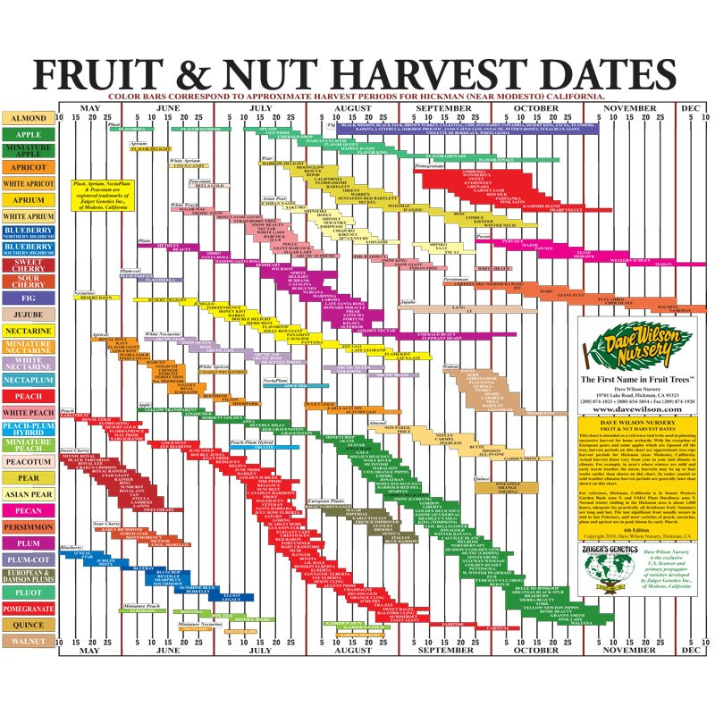 Fruit & Nut Harvest Calendar