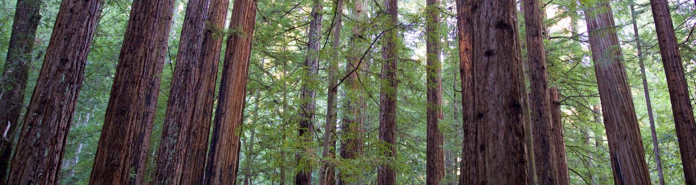 6.redwoods-1500x400