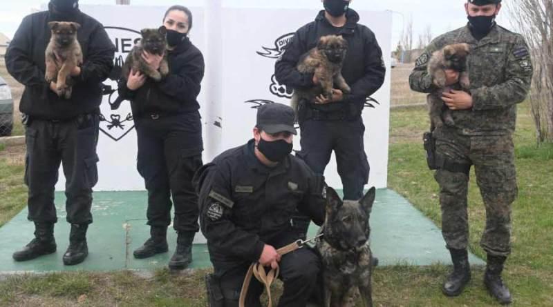 División Canes