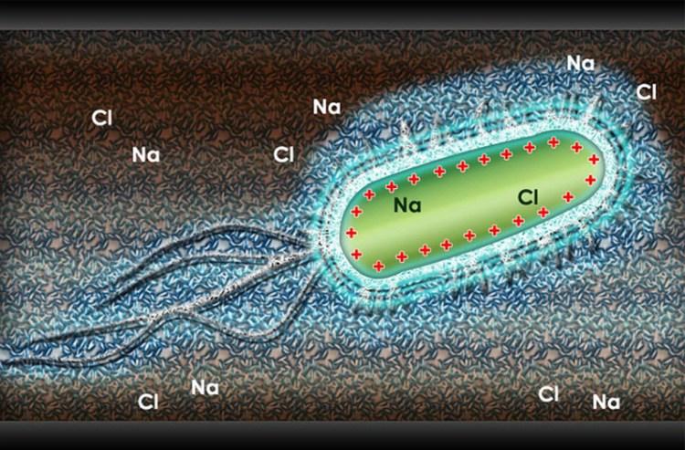 Using HydroFlow for bacteria and algae eradication