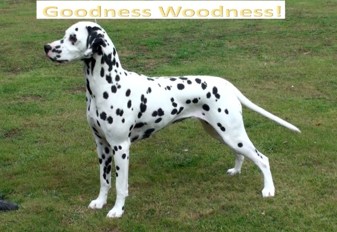 goodness woodness