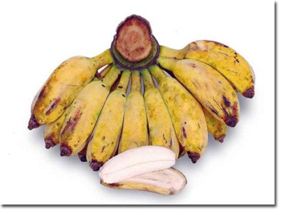 jenis buah pisang