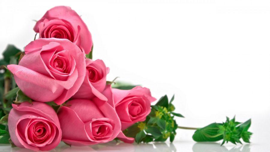 Unduh 58 Gambar Foto Bunga Mawar Pink Paling Keren
