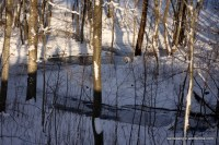 2013-01-24 10-41-47 - IMG_4977