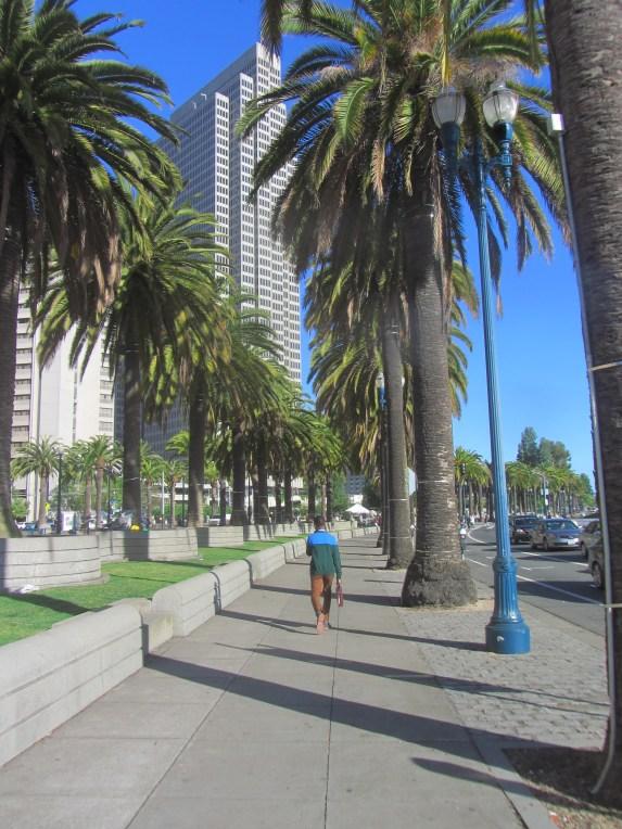 palmu aleja gar ostas krasta ielu