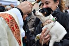 Molts santboians van portar als seus gossos als Tres Tombs // Maria Rubio