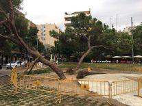 Imatge dels pins afectats per les pluges, amb el tronc tal·lat del que ha caigut // Miquel Caimary
