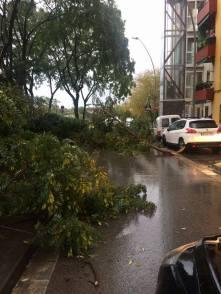 Actuacions de retirada d'arbres // PC Sant Boi