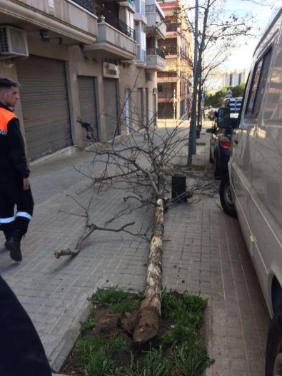 La caiguda d'arbres va ser la incidència més habitual // PC Sant Boi