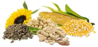 L'impact des omega 6 sur la prise de poids