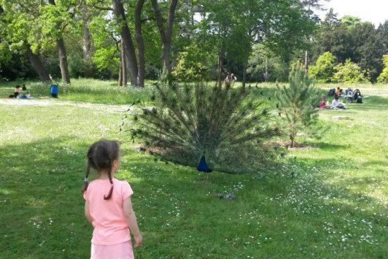 Biophilie enfants - un paon dans la nature devant une petite fille