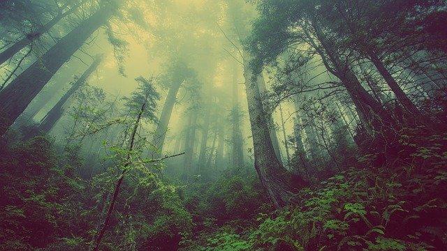 bains de forêt enfants - une forêt vue du sol