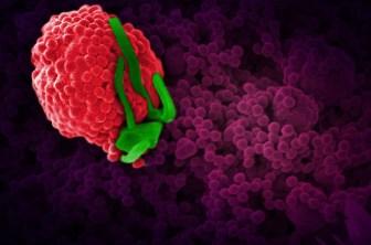 nano, nanoparticules, nanotechnologies, toxiques4