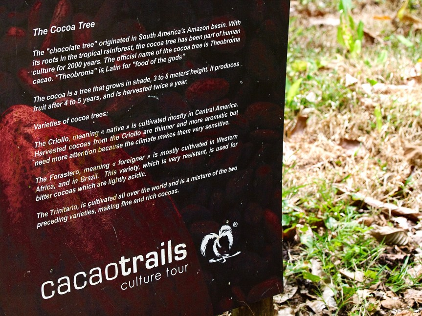 Information board about types of cocoa tree at the CacaoTrails Chocolate Museum, Limón Province, Costa Rica. Ingredients in chocolate