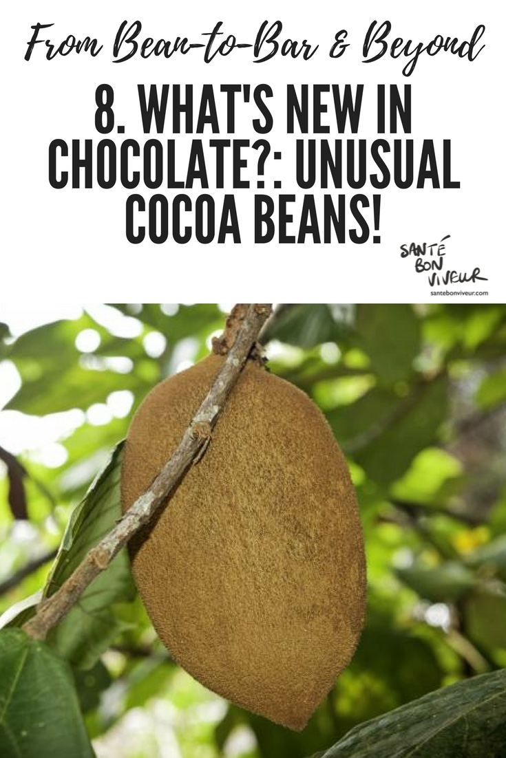 From Bean-To-Bar & Beyond: 8. What's New in Chocolate?: Unusual Cocoa Beans!