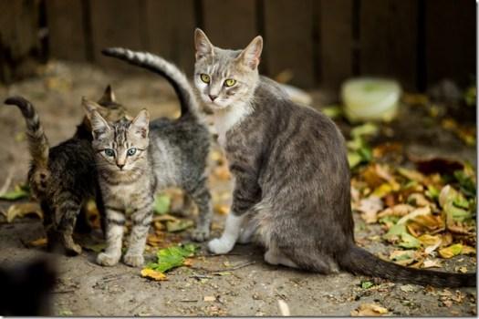 Chats - chatons