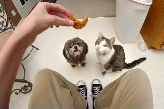 alimentation chien chat