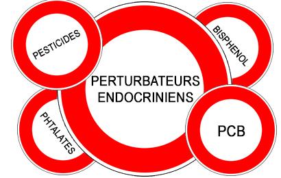"""Résultat de recherche d'images pour """"perturbateurs endocriniens"""""""
