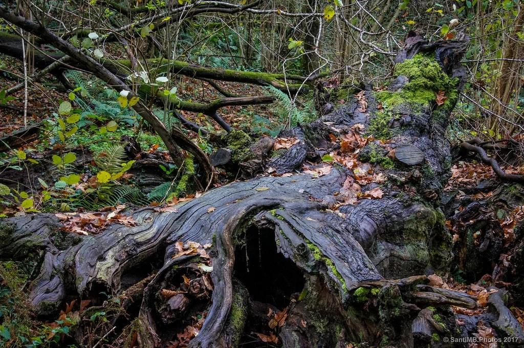 El árbol muerto