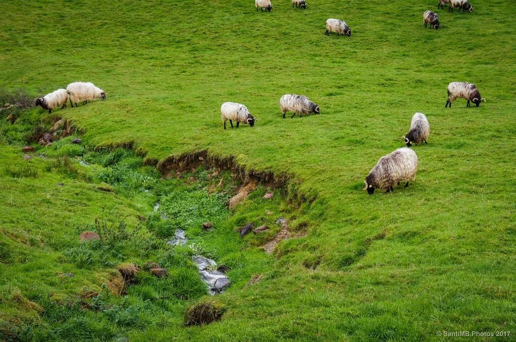 La sabrosa hierba fresca