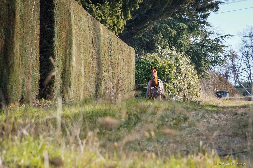 El caballo con gabardina