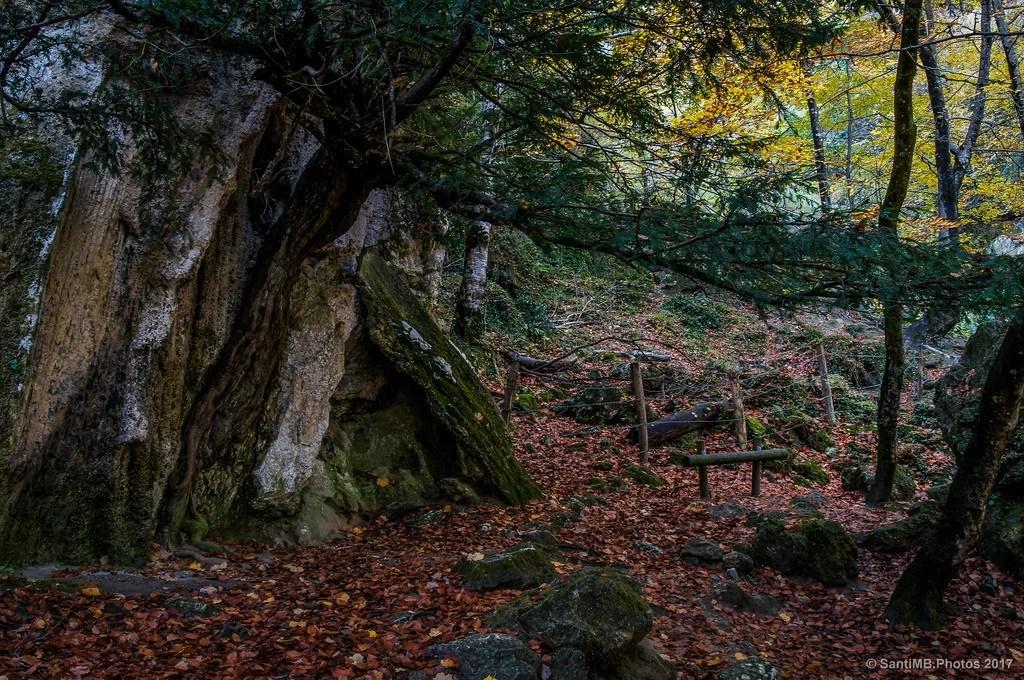 El árbol y la roca