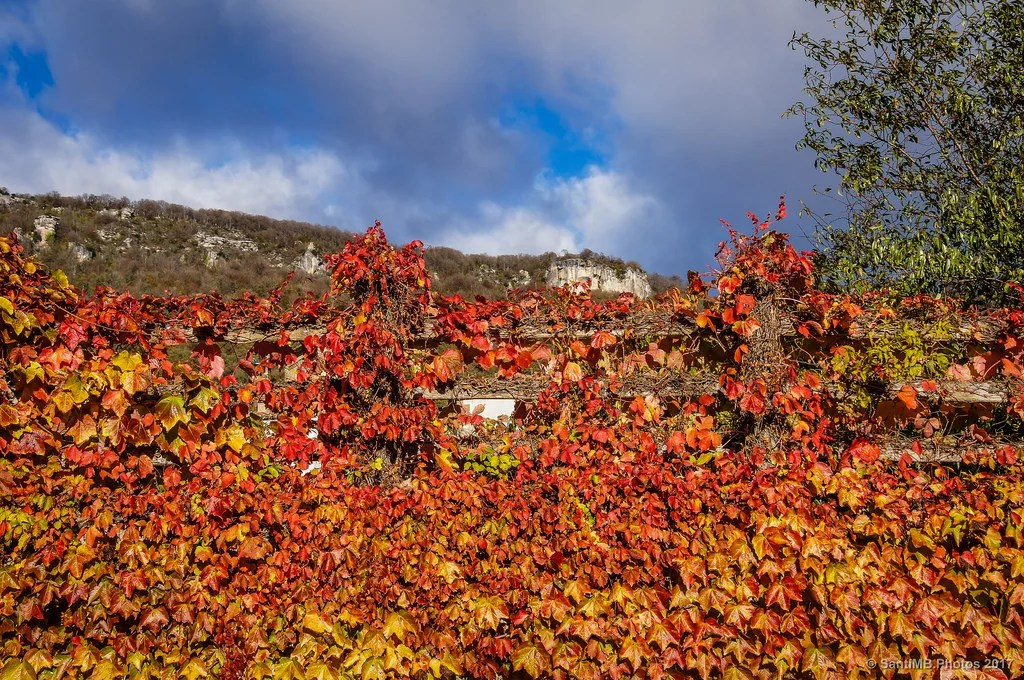 Rojo otoño