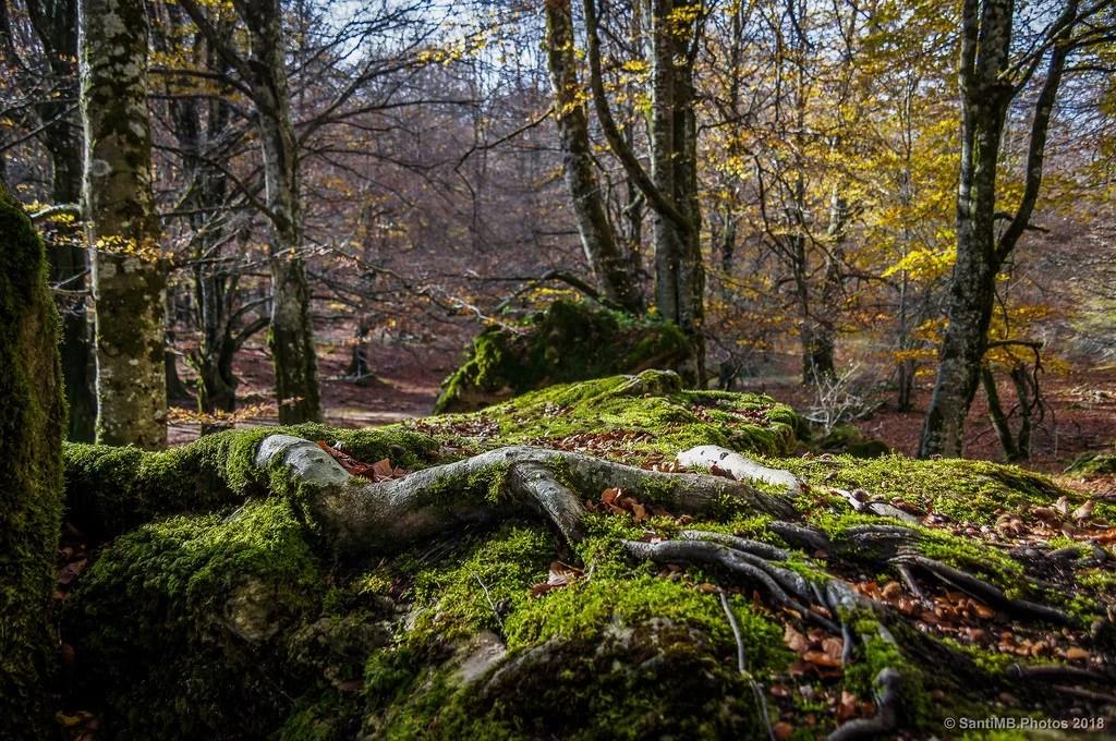 La piel del bosque