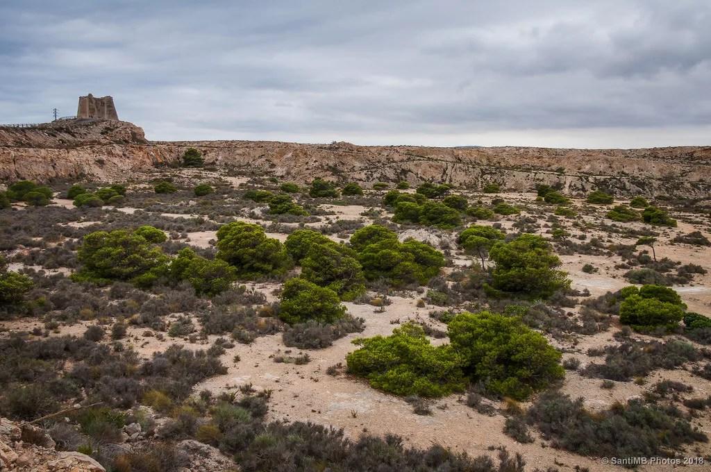 Los pinos de la cantera