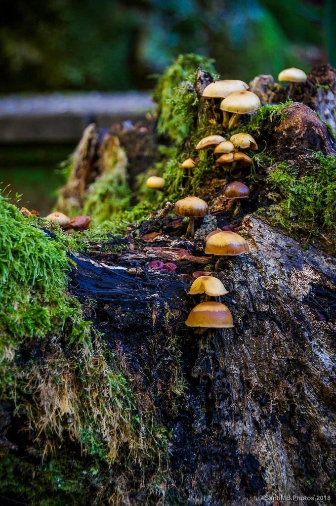 Sobre el viejo tronco