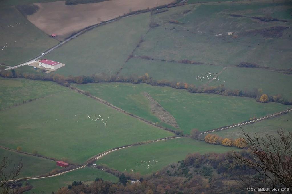 Cada oveja con su rebaño