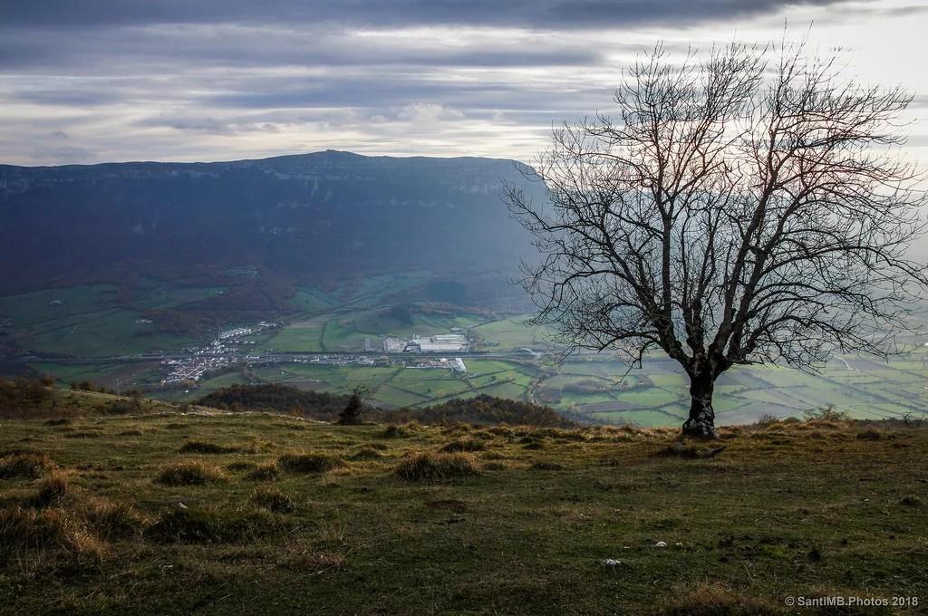 El Beriain y el árbol