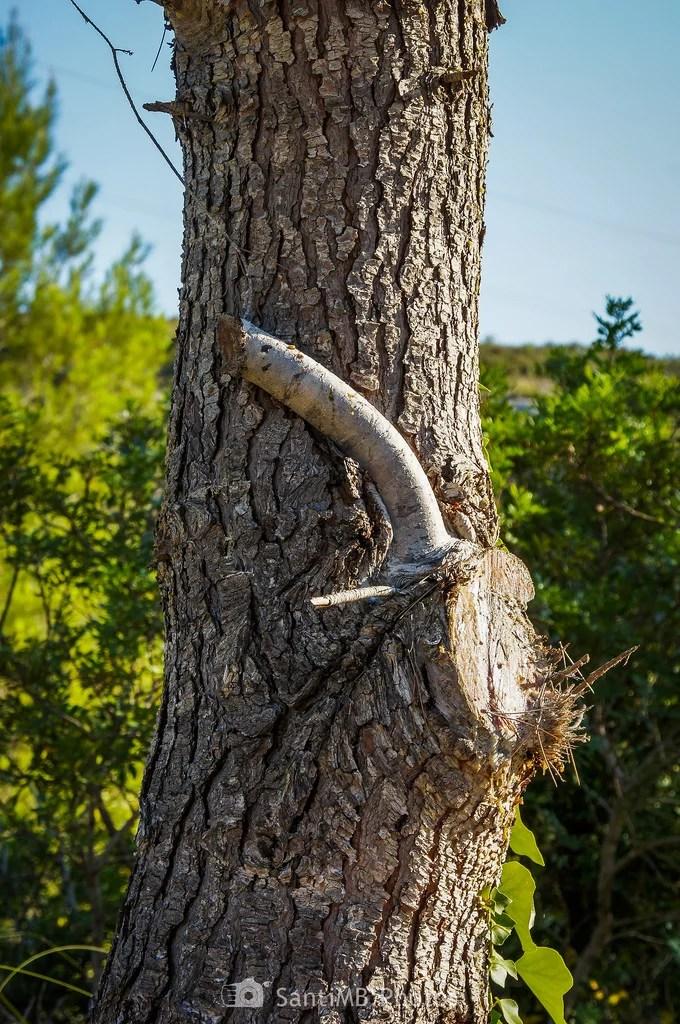 Excitación arbórea