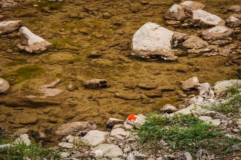 La amapola y el río