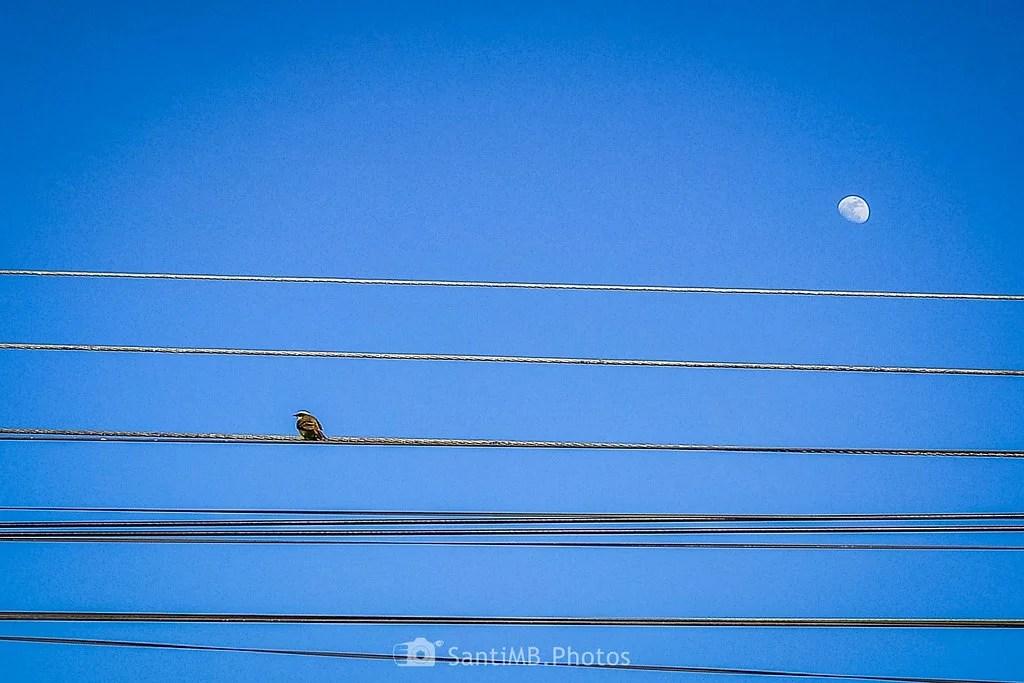 El pájaro y la luna